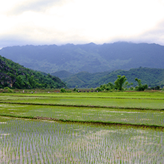beautiful vietnamese landscape