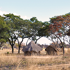 zimbabwean huts on the savannah